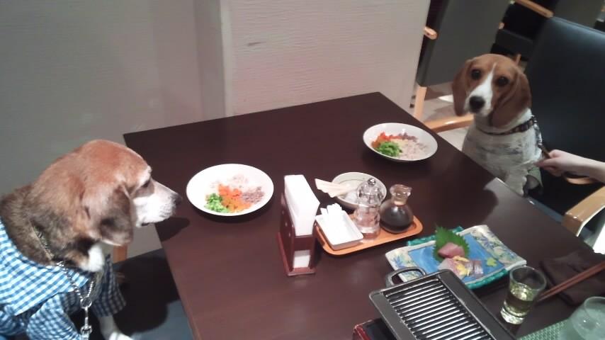 Image result for beagle 犬 私の犬と夕食を食べる